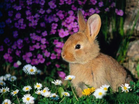 brown-rabbit-wallpaper_1379941159